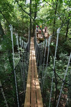 """View from """"SkyHy"""" tree house - Red Mountain Park by freethehops, via Flickr"""