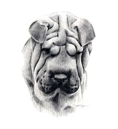 Inspiring Realistic Drawings, Illustrations and Ideas. Awe Inspiring Realistic Drawings, Illustrations and Ideas. Dog Pencil Drawing, Pencil Drawings, Art Drawings, Drawing Art, Cachorros Shar Pei, Fu Dog, Drawing Techniques, Dog Art, Animal Drawings