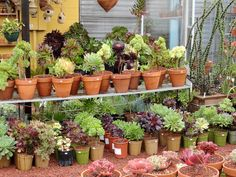 Lots of potted succulents at the Cactus Jungle in Berkeley, California