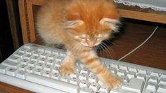 cat typing--pisica dactilografa !