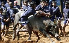 Massive protest in favour of Jallikattu in Madurai #Protest #Chennai #Madurai #JallikattuFestival