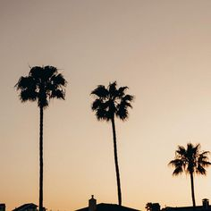 If I were a palm tree Id be the one on the right.  Small but firey.