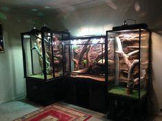Feeding Your Bearded Dragon In The Right Way Reptile Habitat, Reptile House, Reptile Room, Reptile Cage, Bearded Dragon Habitat, Bearded Dragon Cage, Lizard Cage, Snake Terrarium, Diy Terrarium
