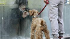 Isolamento atomico Una ragazza saluta il suo cane dietro ai pannelli per lo screening della radioattività (Credits: Reuters / Yuriko Nakao)