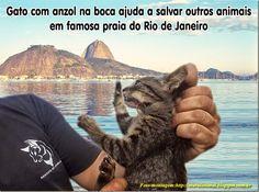 Mural Animal: Gato com anzol na boca ajuda a salvar outros animais em famosa praia do Rio de Janeiro