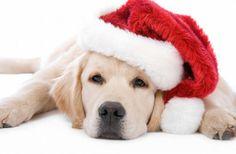 Funny Christmas animals (28 photos) - Xaxor