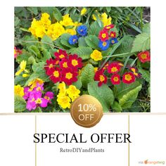 10% OFF on select products. Hurry, sale ending soon!  Check out our discounted products now: https://orangetwig.com/shops/AAB5v98/campaigns/AACeg99?cb=2016004&sn=RetroDIYandPlants&ch=pin&crid=AACeg4d&utm_source=Pinterest&utm_medium=Orangetwig_Marketing&utm_campaign=SPRING_GARDEN_PLANTS