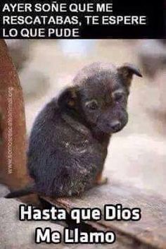 QUE TRISTEZA. Adopta un animalito y brindale un hogar con cariño.