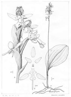 plants drawing - Google Search