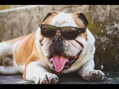 Some pet names are just so overdone. Go off the beaten path with these silly, fun, or just downright random dog names no one (not even your vet) will see coming. Funny Dog Names, Pet Names, Funny Dogs, Cute Dogs, Funny Bulldog, Adorable Puppies, Cute Dog Photos, Dog Pictures, Bull Dog Ingles