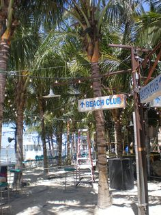 Ocean City, Maryland   Palm trees at Seacrets
