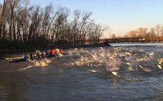 Watch: University rowers attacked by flying Asian carp in Washington - Independent.ie