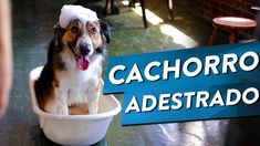 13 benefícios do adestramento de cães Dogs, Youtube, Puppy Trainer, Old Dogs, Animals, Pet Dogs, Doggies, Youtubers, Youtube Movies