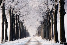 Netherlands Winter by Lars van de Goor