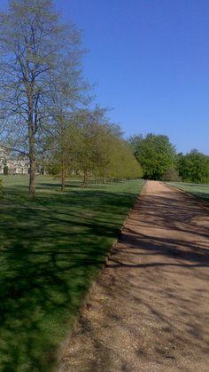 21 & 22. Perimeter Path and Lime Walk – A line of yew trees leading to the path surrounding the Ashridge gardens. www.ashridge.org.uk