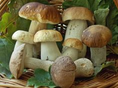 Przepisy z leśnymi grzybami Polish Recipes, Stuffed Mushrooms, Appetizers, Menu, Vegan, Vegetables, Food, Kitchen, Mushroom