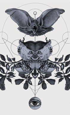 The Panoply Plates — Fine Art Prints by Hannes Hummel, via Behance #etching #engraving #illustration #animals #geometry #bat