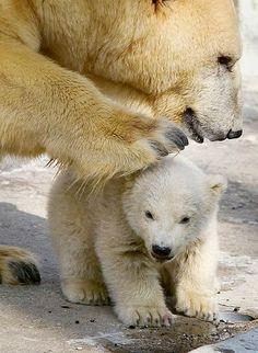 【キュン死注意!】輪になって踊るこぐま【可愛いクマ】 - NAVER まとめ