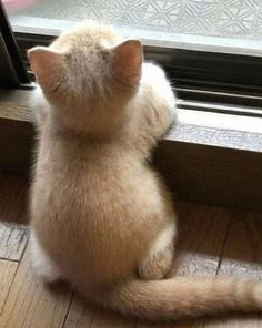 Cute Baby Cats, Cute Little Animals, Cute Cats And Kittens, Cute Funny Animals, Cute Dogs, Cute Kitty, Kittens Cutest Baby, Baby Animals Pictures, Cute Animal Pictures