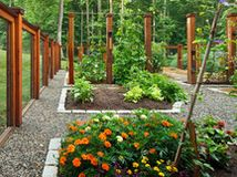 Got a garden patch and a hankering for the freshest veggies and berries? This guide will get even urban gardeners farming