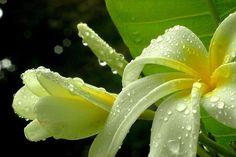 Flower story - delicate