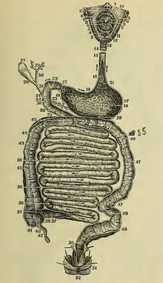 Henry H. Smith (https://pinterest.com/pin/287386019948657891), Anatomical Atlas, illustrative of the structure of the human body, (Philadelphia, 1867).
