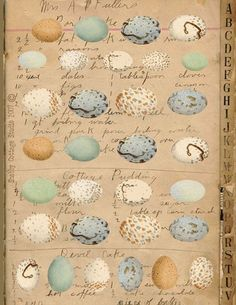 Digital Download Collage Sheet Bird Eggs by shabbycottagestudio