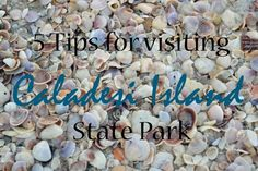 Caladesi Island State Park is a natural island near Clearwater Beach, Florida. It's a great place to collect seashells, enjoy a picnic or try a kayak trail through the mangroves.