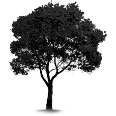 tree black & white ❤ liked on Polyvore