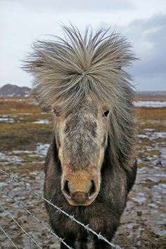 Bad hair day | Flickr - Photo Sharing!