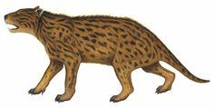 Wakaleo / Вымершие животные / Твой Блог