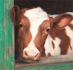 Farm cow illustration by Andrew Hutchinson