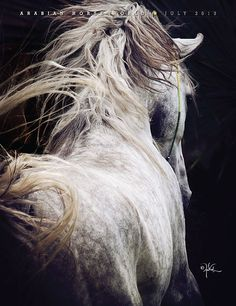Arabian Horse. love this shot and the way the photographer has captured the movement.