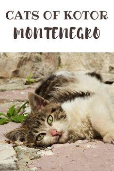 Cats in Kotor Old Town, Montenegro   Kathmandu & Beyond