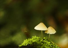 Pretty fungi