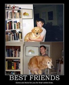 Just another way dogs are often better than people.....couldnt agree more!
