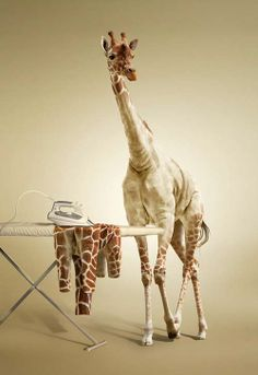 Photo Manipulation Undress a Giraffe - Photo Manipulation Tutorials