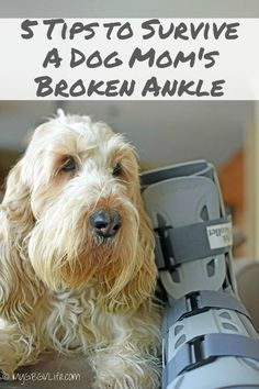 My GBGV Life 5 Ways To Survive A Dog Mom's Broken Ankle