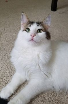 And this is our fluffy cat. Photo cred to my boyfriend part 2. http://ift.tt/2rxOIq1