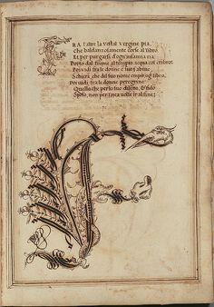 Letter 'F' -  Opera dianto nella quale vedrete molte caratteri di lettere  - Antonio Schiratti - 1600-1615