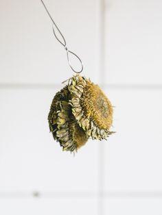 DIY Ein Büffet aus Sonnenblumenkernen  Mit diesem Sonnenblumenkern-Buffet locken Sie auf jeden Fall Vögel in Ihren Garten. Dazu benötigen Sie:      Zwei große Sonnenblumen (zum Beispiel russische Wagenradsonnenblumen wie Russischer Riese oder Russisches Mammut)     Einen Kreuzschraubenzieher     Etwa 1 Meter Blumendraht