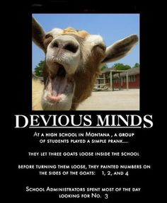 If we had goats at our school, I would sooo get someone to help me with this! Hahaha by day orange ellen dog clips scary pranks Easy Pranks, Good Pranks, Funny Pranks, Funny Jokes, Hilarious, Funny Insults, Funny Images, Funny Photos, School Pranks