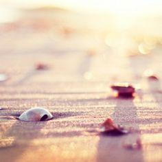 beachside photography | craftgawker