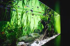 Aquatic Warehouse (aquaticwarehouse858) on Pinterest
