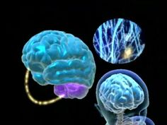 Brain and Exercise? What a great couple! What do we know about the Brain and Exercise? Can we use our Brain for a better body, a better Health?, Can we stop Brain decline?