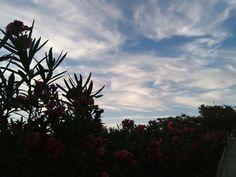 Desde las Islas Canarias  ..Fotografias  : Amaneciendo en San Fernando de Maspalomas Gran Can...