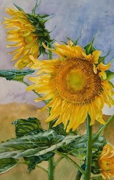 Step 5 of tall sunflowers watercolor painting demonstration by artist Lisa Hill