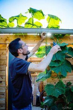 Comment produire 300 kg de légumes dans un potager de 25m2