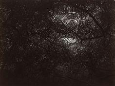 Le Jardin de Rothmayer - Josef Sudek, 1954