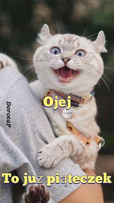 Motto, Good Morning, Humor, Cats, Disney, Pictures, Animals, Buen Dia, Photos